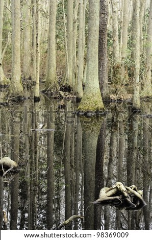 Cypress swamp in First Landing State Park, Virginia Beach, Virginia