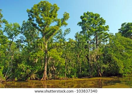 Cypress Swamp in the Louisiana Bayou - stock photo
