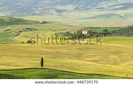 cypress tree and real tuscany landscape in Tuscany in Italy - stock photo