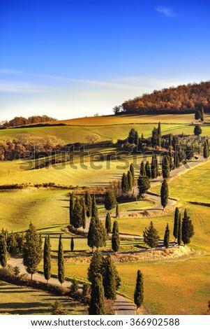 Cypress tree scenic road in Monticchiello near Siena, Tuscany, Italy, Europe. - stock photo