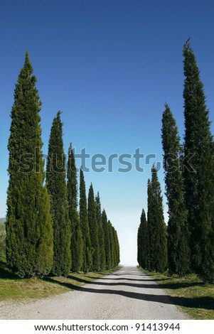 Cypress trees line a driveway in Tuscany - stock photo