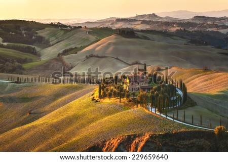 Cypress Tuscany in the beautiful landscapes of the setting sun.