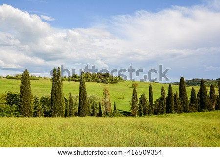 cypresses in a row in the green Tuscan valleys of Chianti to Siena - stock photo