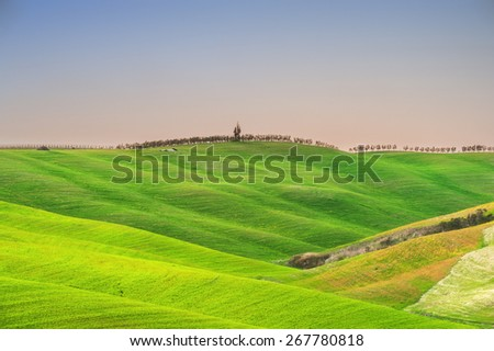 Cypresses on the tuscan hill in sunset light - stock photo