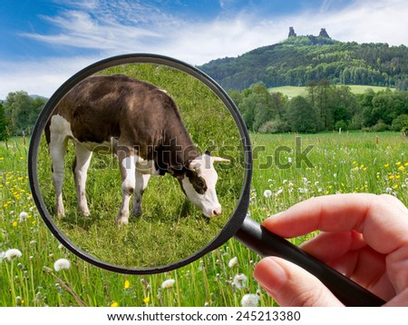 czech agriculture - green farm with animals - cow - stock photo