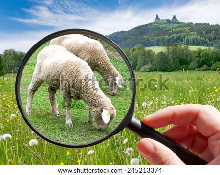czech agriculture - green farm with animals - two sheep - stock photo