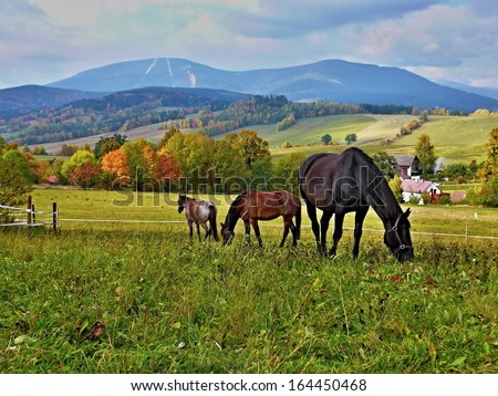 Czech Republic-horses on pasture - stock photo