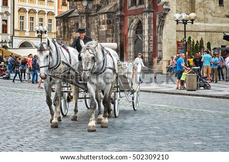 Czech Republic. Prague. Team of white horses with a coachman on the Old Town Square in Prague. June 13, 2016