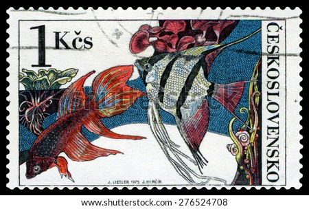 CZECHOSLOVAKIA - CIRCA 1975: a stamp printed by Czechoslovakia  show Aquarium  Fish  Beta splendes regan and pterophyllum scalare, circa 1975