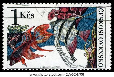 CZECHOSLOVAKIA - CIRCA 1975: a stamp printed by Czechoslovakia  show Aquarium  Fish  Beta splendes regan and pterophyllum scalare, circa 1975 - stock photo