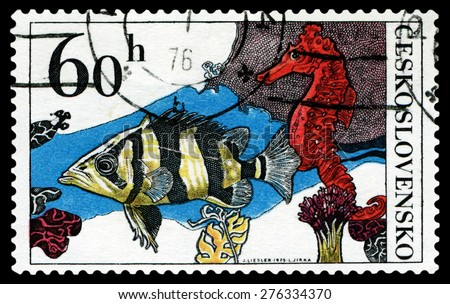 CZECHOSLOVAKIA - CIRCA 1975: a stamp printed by Czechoslovakia  show Aquarium  Fish Datrioides Microlepis and Sea Horse, circa 1975 - stock photo