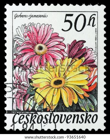 CZECHOSLOVAKIA - CIRCA 1980: A stamp printed in Czechoslovakia, shows a gerbera jamesonii, circa 1980 - stock photo