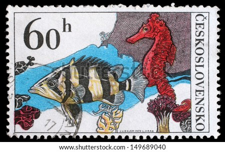 CZECHOSLOVAKIA - CIRCA 1974: A stamp printed in Czechoslovakia, shows Datrioides Microlepis and Sea Horse, circa 1974