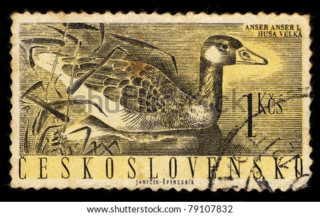 CZECHOSLOVAKIA - CIRCA 1960: A Stamp printed in Czechoslovakia shows image of Anser anser L (Greylag Geese), circa 1960