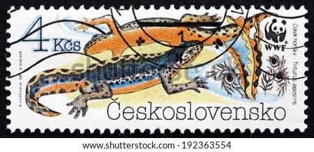 CZECHOSLOVAKIA - CIRCA 1989: a stamp printed in the Czechoslovakia shows the Alpine Newt, Triturus Alpestris, Amphibians, World Wildlife Fund, circa 1989 - stock photo