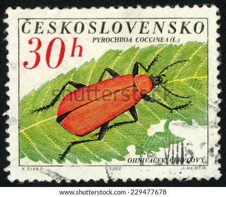 CZECHOSLOVAKIA - CIRCA 1962: stamp printed in Czech (Ceskoslovensko) shows cardinal beetle (pyrochroa coccinea; ohnivacek cervcovy) resting on leaf; beetles; Scott 1145 A437 30h red green; circa 1962 - stock photo
