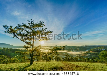 DA LAT, VIETNAM, May 30, 2016: pine forest, highland Da Lat city fog in the morning