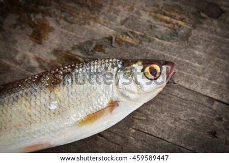 Dace fish on the wooden background