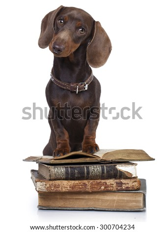 dachshund  dog and retro book - stock photo