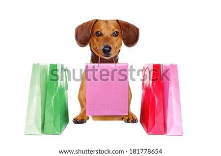 dachshund dog holding paper bag - stock photo