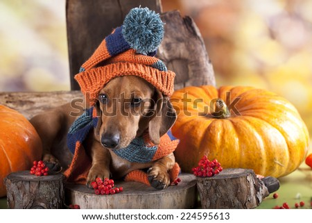 dachshund dog knitted hat and scarf
