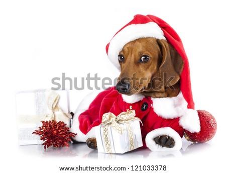 dachshund dog wearing a santa hat - stock photo