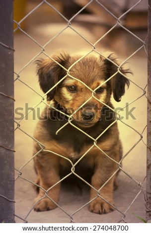 Dachshund puppy sitting behind the wire mesh fence - in retro vintage filter - stock photo