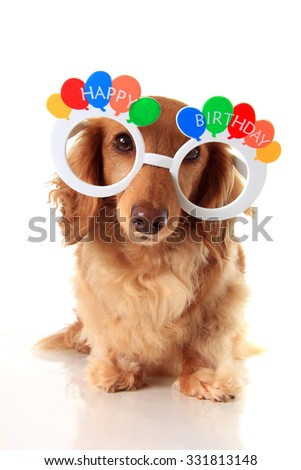 Dachshund puppy wearing Happy Birthday glasses. Also available in horizontal.  - stock photo