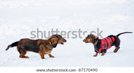 Dachshunds Winter Games