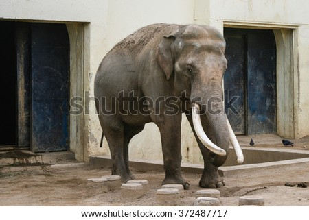 DAEGU, KOREA - MARCH 12, 2009: Elephant at Dalseong-park, South Korea.