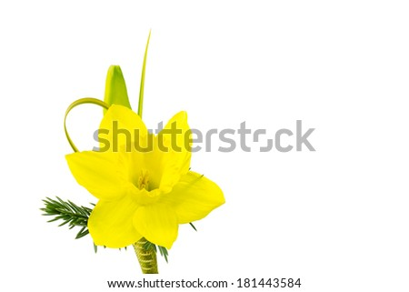 Daffodil boutonniere for  special occasion such as for best man or groom in spring wedding. Isolated on white. - stock photo