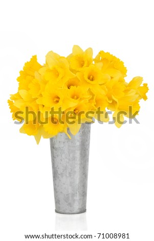 Daffodil flowers in a distressed aluminum vase, over white background.