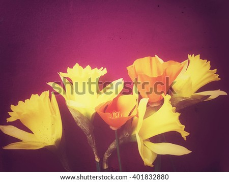 Daffodils and California poppies on purple - stock photo