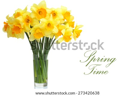 Daffodils in a glass isolated - stock photo