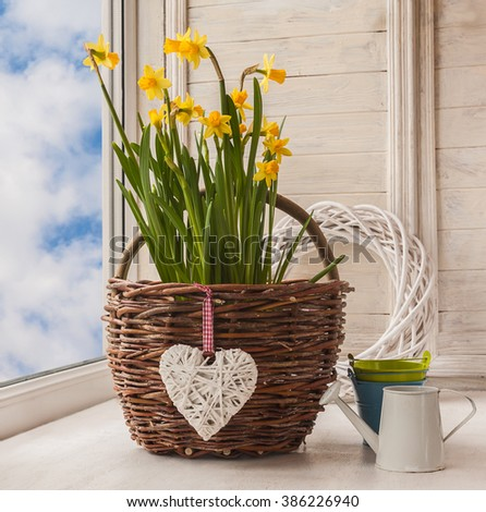 Daffodils in rural  basket and a decorative watering can on background braided circle - stock photo