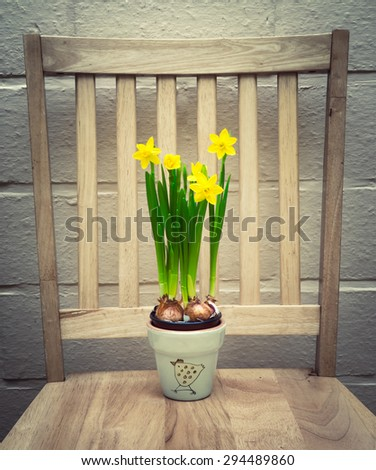Daffodils in vase on wooden chair - stock photo