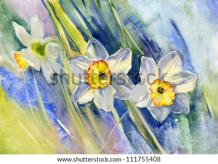 Daffodils. Watercolor. - stock photo