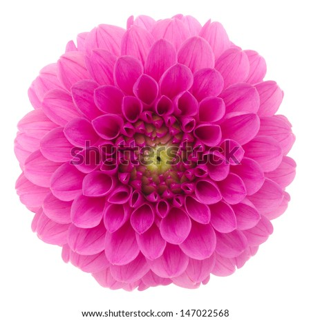 Dahlia. Deep focus. No dust. No pollen. More flower head in my portfolio. - stock photo
