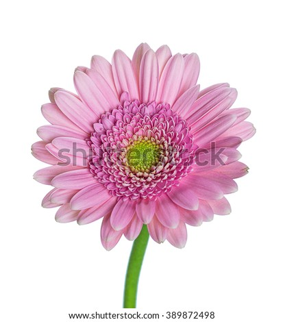 Dahlia flowers fall design.With copy space.Floral background with white flowers Campanula. - stock photo