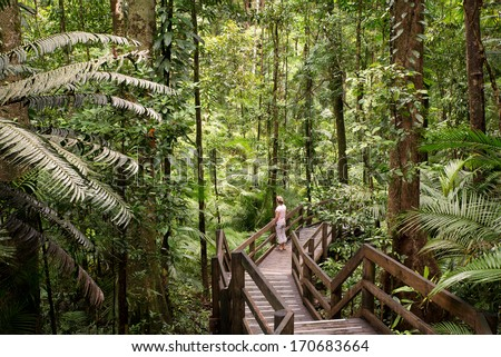 Daintree National Park, rainforest scenery in Queensland, Australia - stock photo