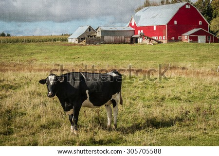Dairy cow and a red barn on a farm with a vintage texture effect. - stock photo