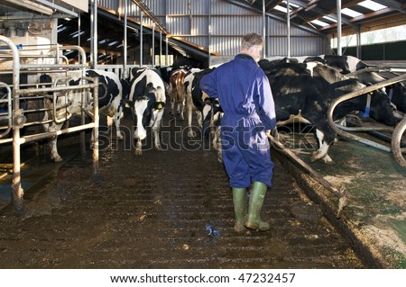 Dairy farmer cleaning a stable near a fully automated milking robot