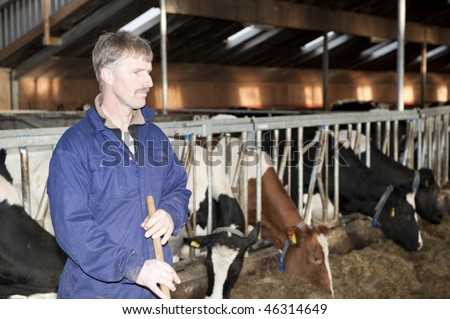 Dairy farmer in the foreground, looking sternly away from the camera with his live stock in the barn behind him with shallow depth of field - stock photo