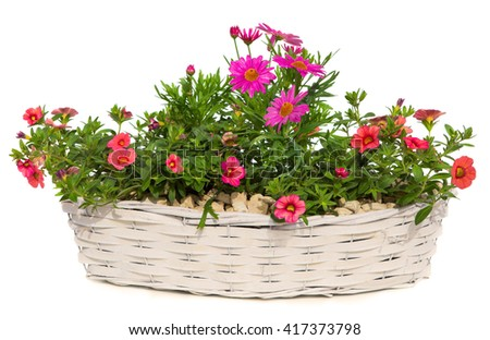 Daisies and Petunia flowers are decorated in a white basket, on white. - stock photo
