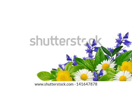Daisies, blue and yellow wild flowers and green leaves on the white background - stock photo