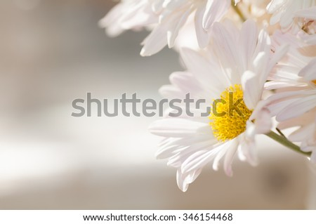 daisies close up background - stock photo