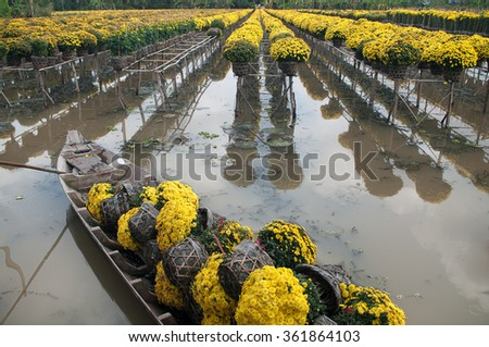 Daisies flowers are collected by sampan to in Sa Dec Flower village. This is to prepare for Tet Holidays or Lunar New Year in Vietnam.