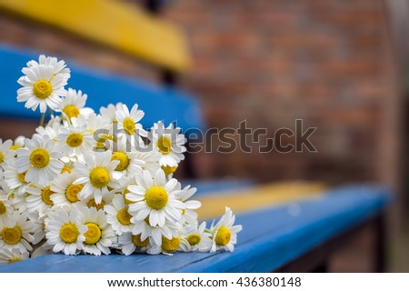 Daisies lie on a bench in the street - stock photo
