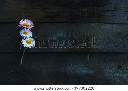 Daisies on a wooden board