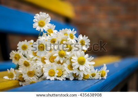 Daisies on the bench, background - stock photo